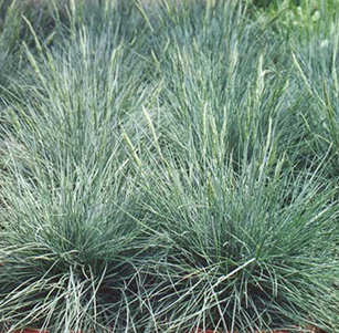 Ornamental Grasses & Clumping Plants